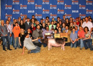 Caileigh Johnson Reserve Grand Champion HLSR 2015